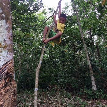 These people have amazing skills when it comes to climbing trees!